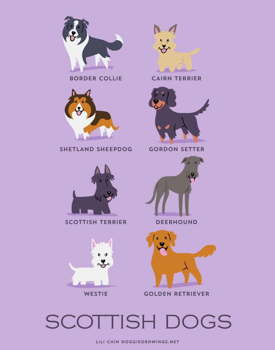 Dogs-Of-The-World-Cute-Poster-Series-Shows-The-Geographic-Origin-Of-Dog-Breeds10  880
