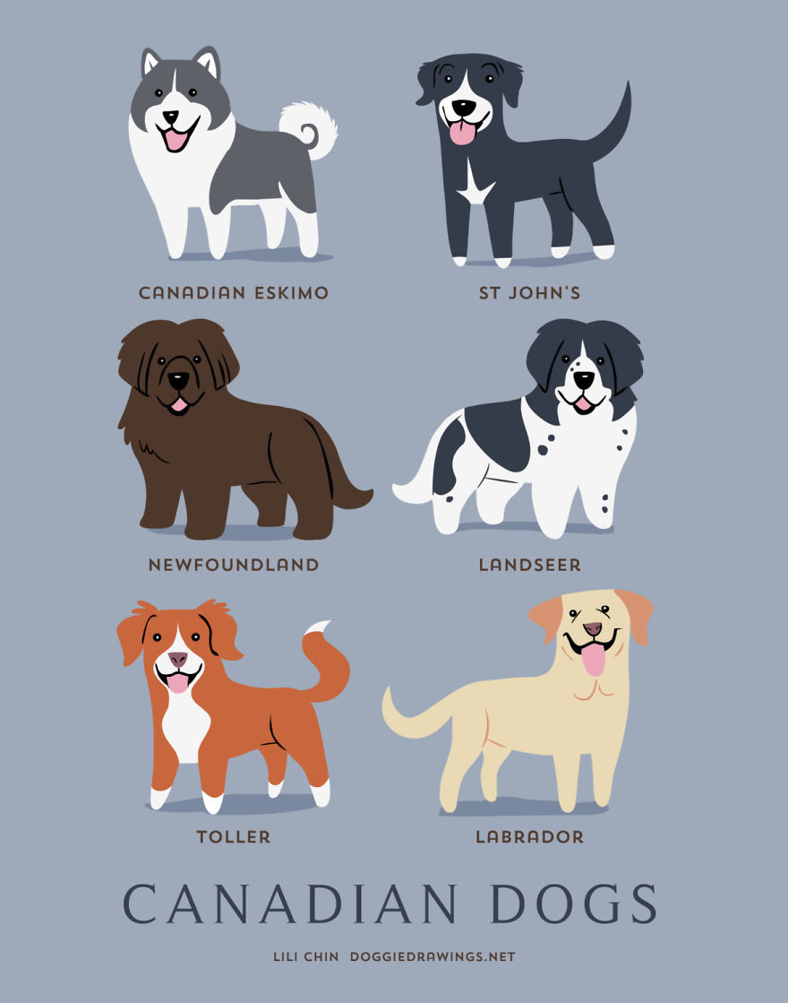 Dogs-Of-The-World-Cute-Poster-Series-Shows-The-Geographic-Origin-Of-Dog-Breeds12  880