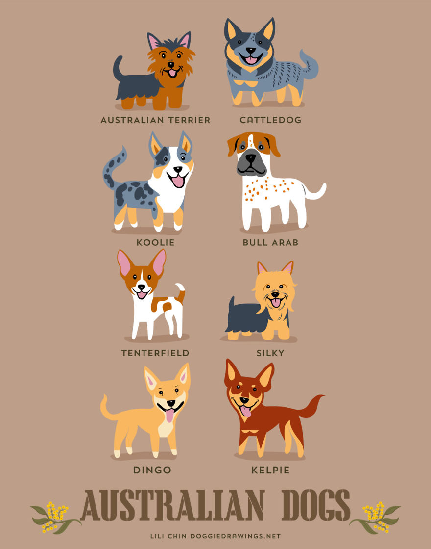Dogs-Of-The-World-Cute-Poster-Series-Shows-The-Geographic-Origin-Of-Dog-Breeds2  880