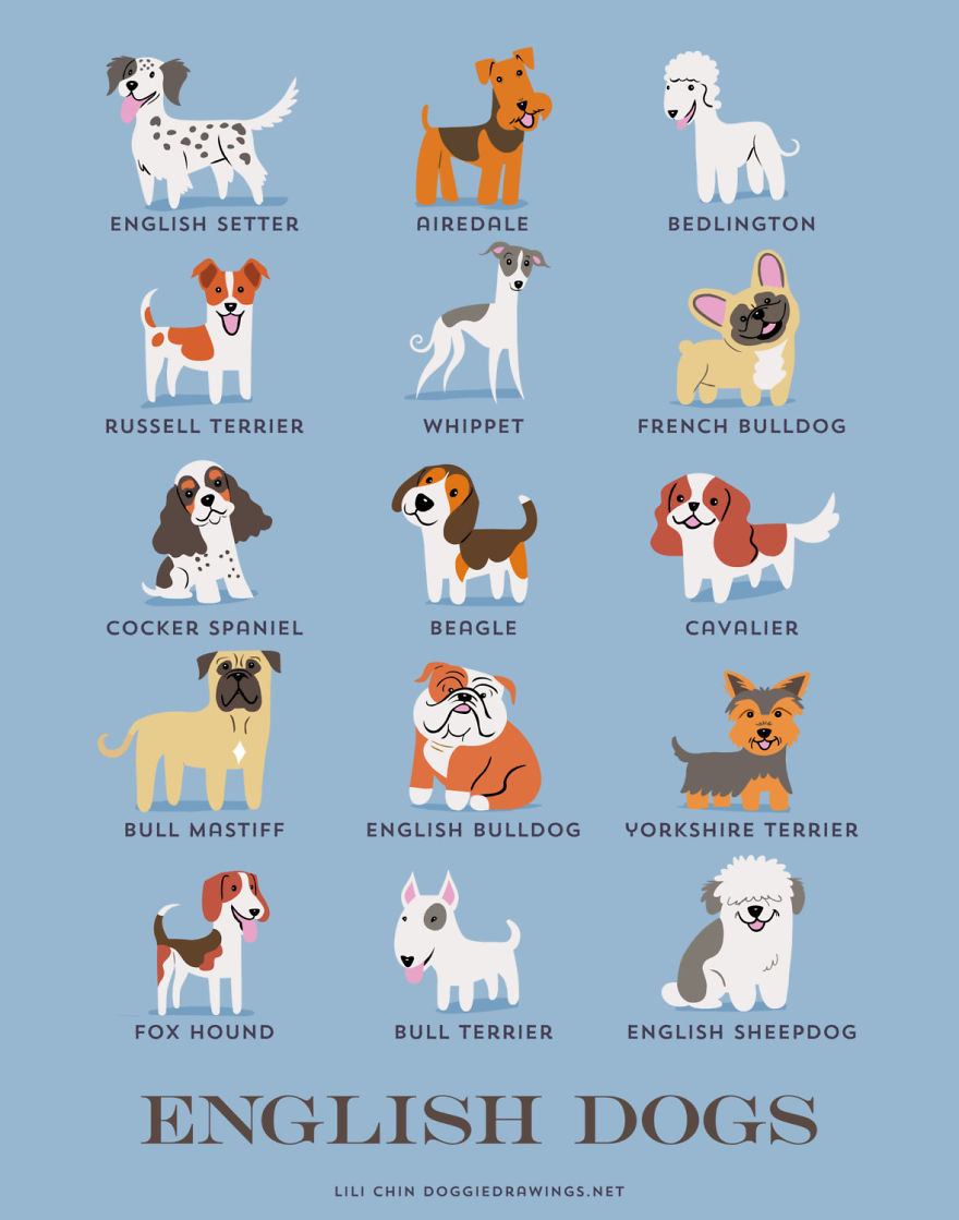 Dogs-Of-The-World-Cute-Poster-Series-Shows-The-Geographic-Origin-Of-Dog-Breeds5  880