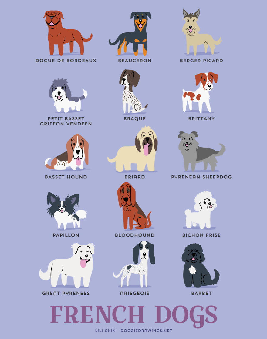 Dogs-Of-The-World-Cute-Poster-Series-Shows-The-Geographic-Origin-Of-Dog-Breeds6  880