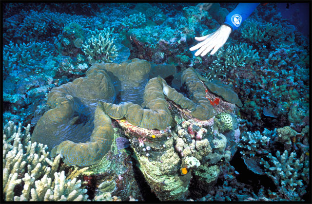 PAL 05 07 Giant Clam