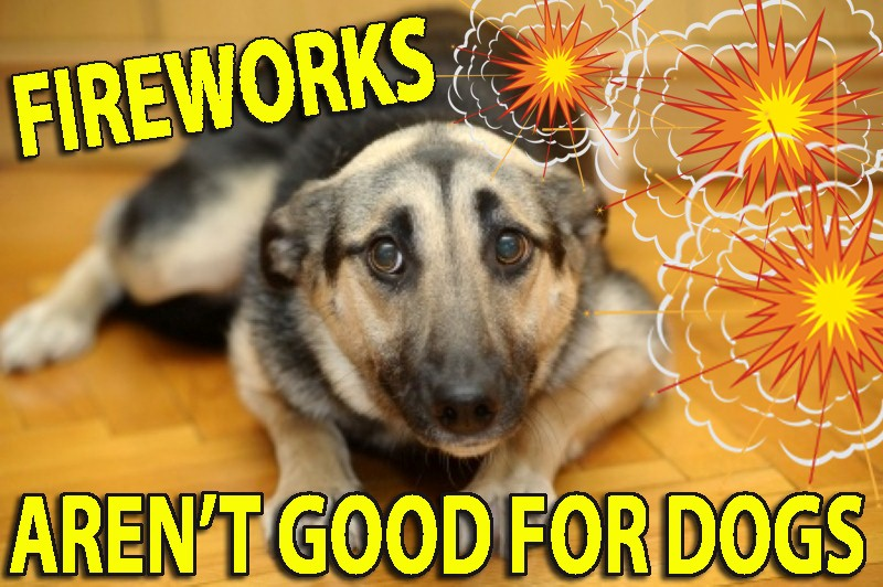 dog traumatised FIREWORKS