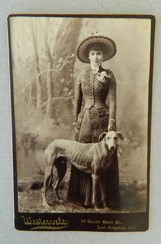 lady greyhound copy
