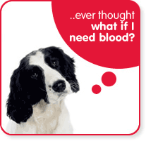 pet-blood-bank