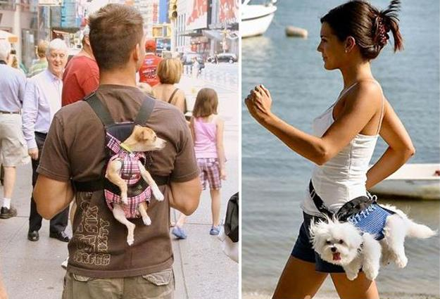 pets-bags-carriers-design-ideas-3