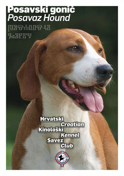 posavac this is iteresting addition on this breed