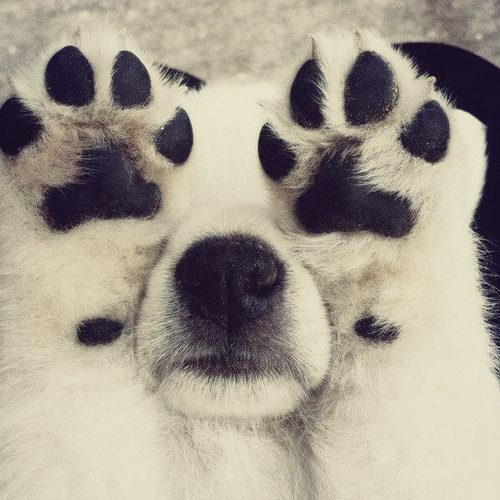 puppy-paws-up